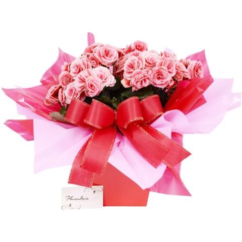 Vaso de Begônia 28cm cor Rosa