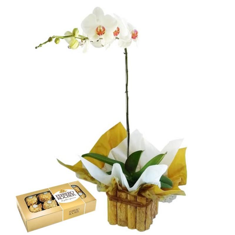 Orquídea Phalaenopsis no Cachepô de Madeira + Ferrero Rocher